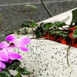 Virágládák